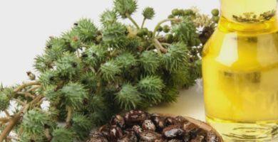 conheca-alguns-beneficios-do-oleo-de-ricino