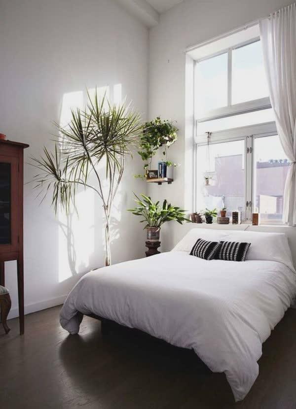 top-decoracoes-com-plantas-1