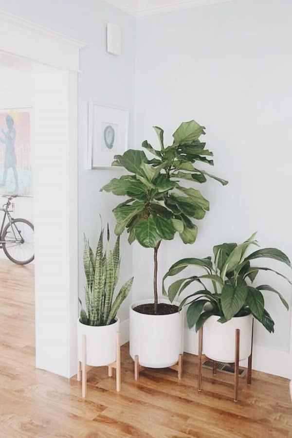 top-decoracoes-com-plantas-13