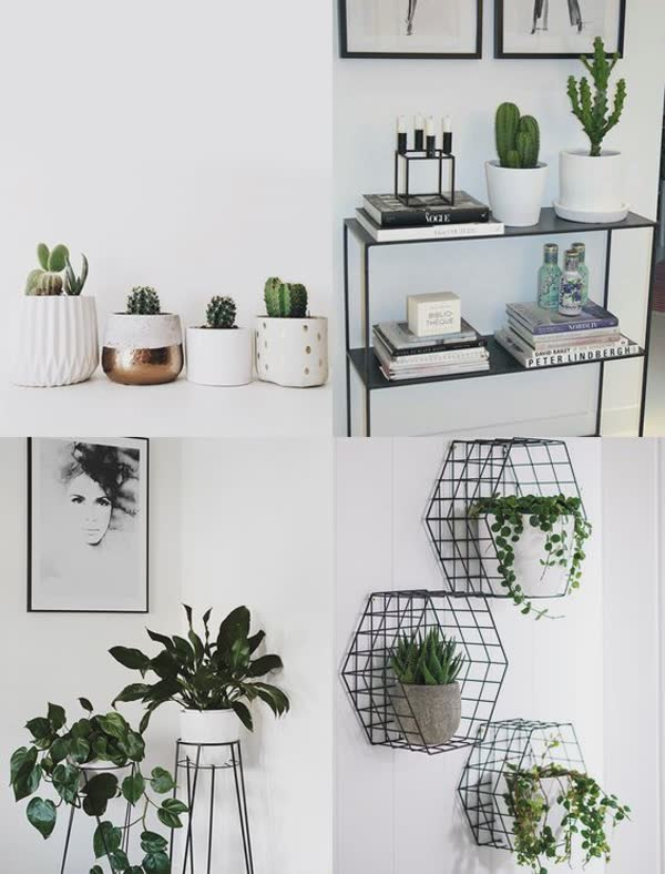 top-decoracoes-com-plantas-2