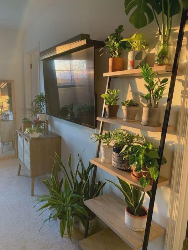top-decoracoes-com-plantas-7